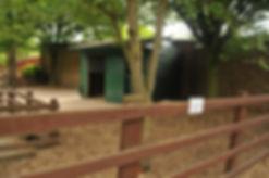 Kunekune Pig, Kunekune Pig Habitat, Kunekune care, kunekune