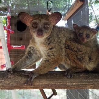 Bushbaby Enclosure