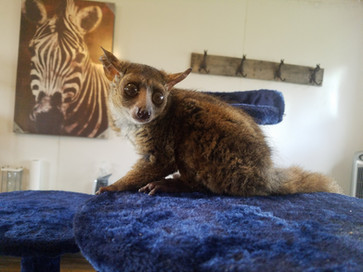 Bushbaby In Depth Pet Care