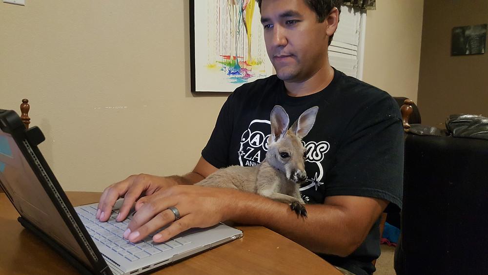 Baby Kangaroo Socializing
