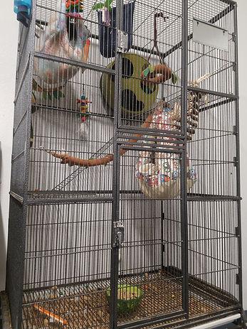 Flying Squirrel, Flying Squirrel Habitat, Flying Squirrel Cage Setup, Flying Squirrel Pet