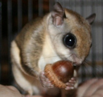secret acorn.jpg