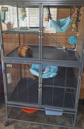 Janda Exotics, Janda Exotics Donations, Donations, Cute Animals, Exotic Animals, Exotic Pets, Farm Animals