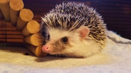 hedgehoghouse.jpg