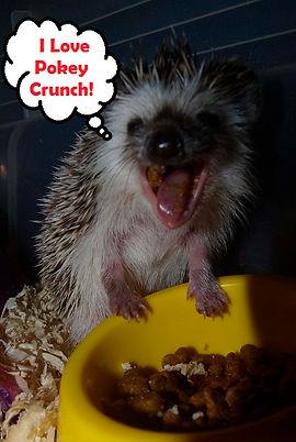 Hedgehog, Pokey Crunch, Hedgehog food