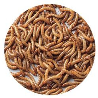 Mealworms Freeze Dried