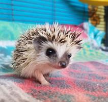Hedgehogcutie.jpg