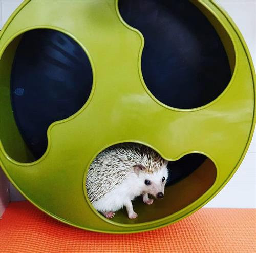 Hedgehog Wheel