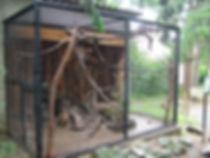Coatimundi, Coati, Coatimundi Breeder, Coati Breeder, Coati Care, Coati Habitat