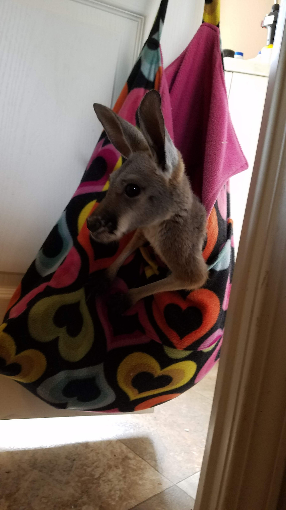 Kangaroo in Homemade Pouch