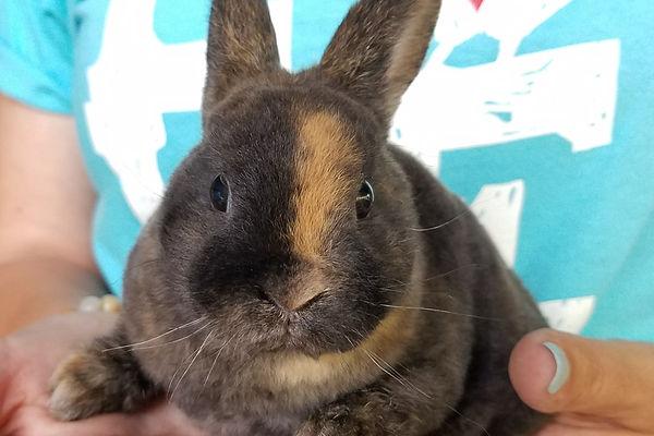 Rabit, Bunny, Janda Exotics, Janda Exotics Donations, Donations, Cute Animals, Exotic Animals, Exotic Pets, Farm Animals
