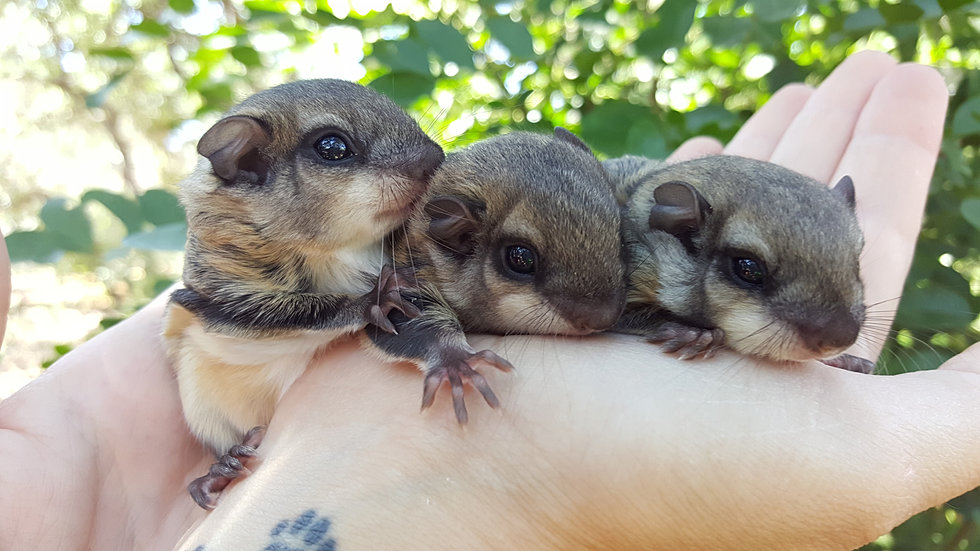 ALL ABOUT SQUIRRELS: Article on What Do Squirrels Eat ...   Baby Squirrel Diet