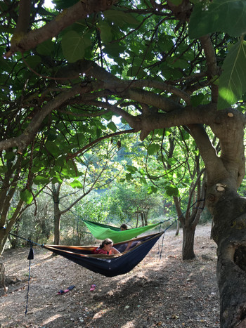 Hammocks above the bocce