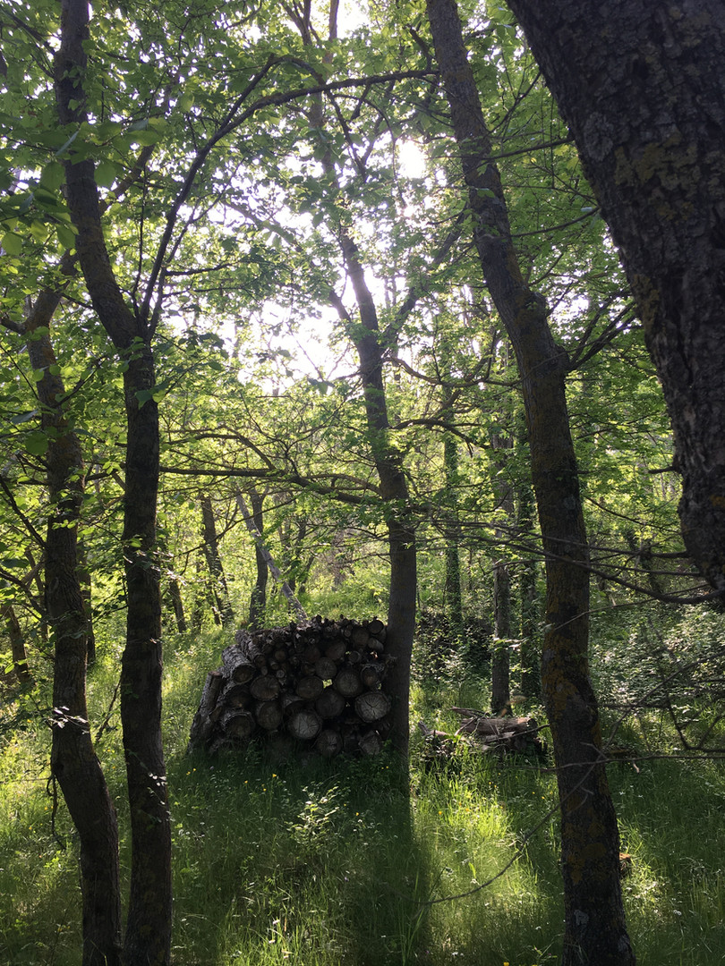 The wood in spring