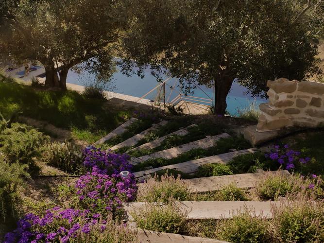 Verbena and thyme steps