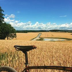 The wheat is waving.jpg