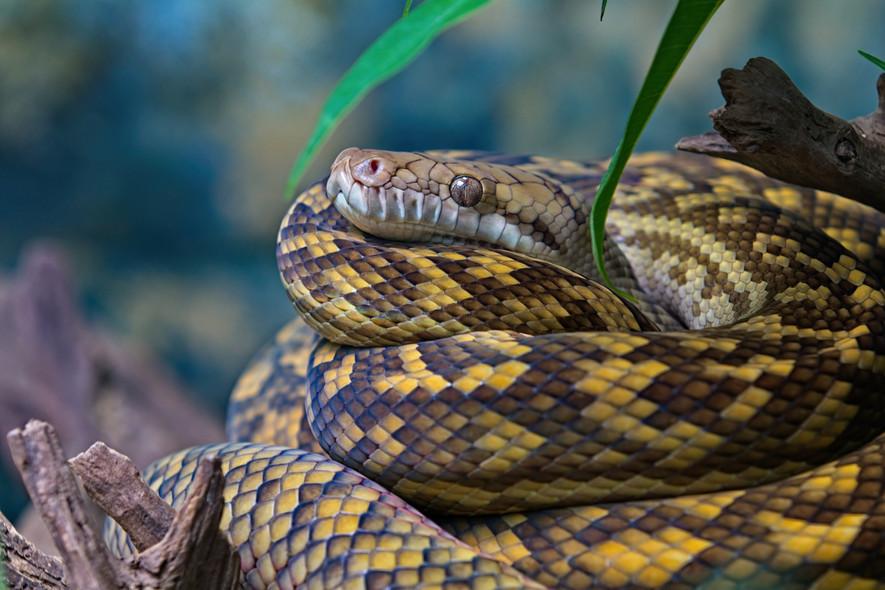 Scrub Python