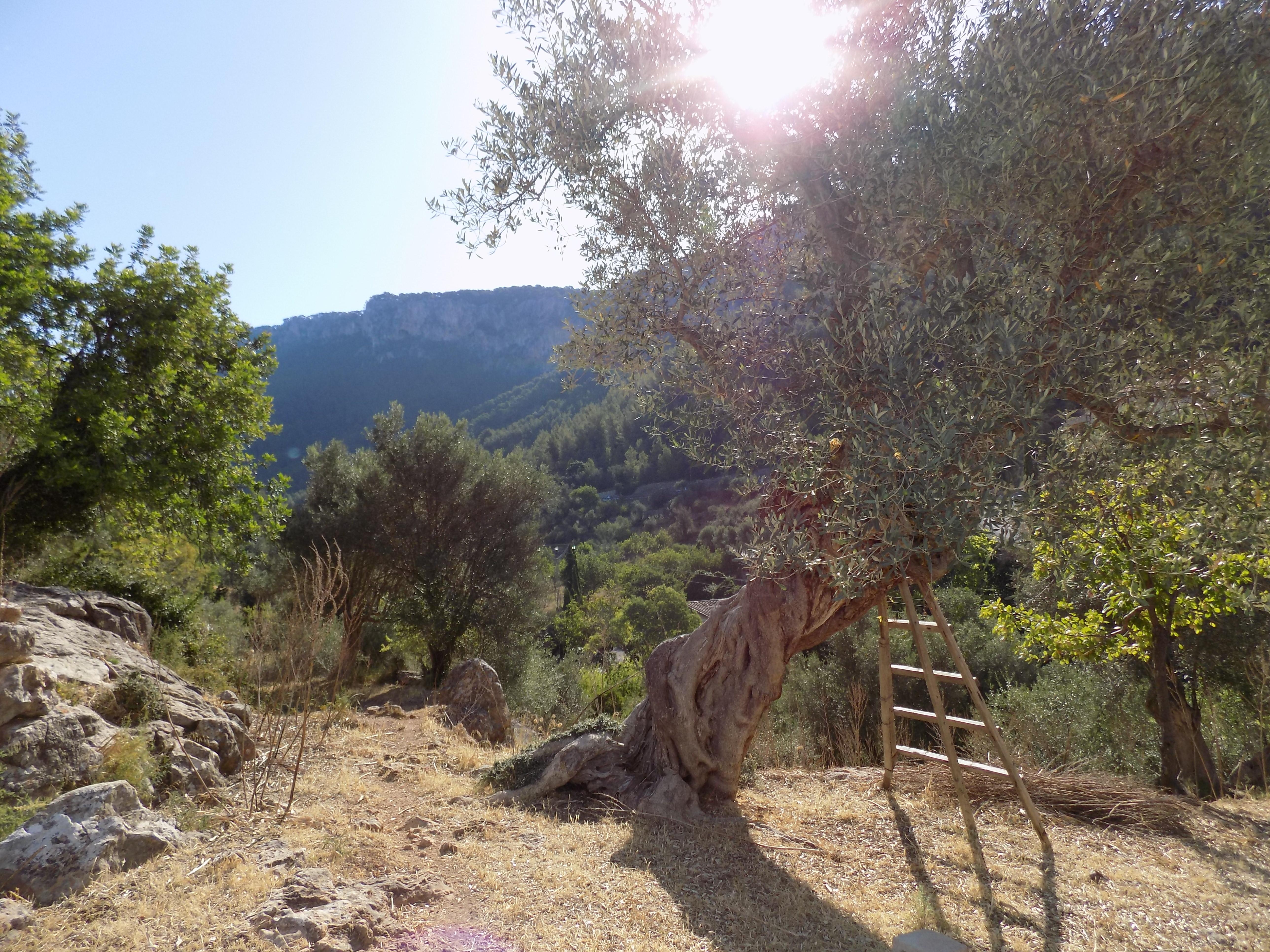 Venta Finca con vistas en Bunyola