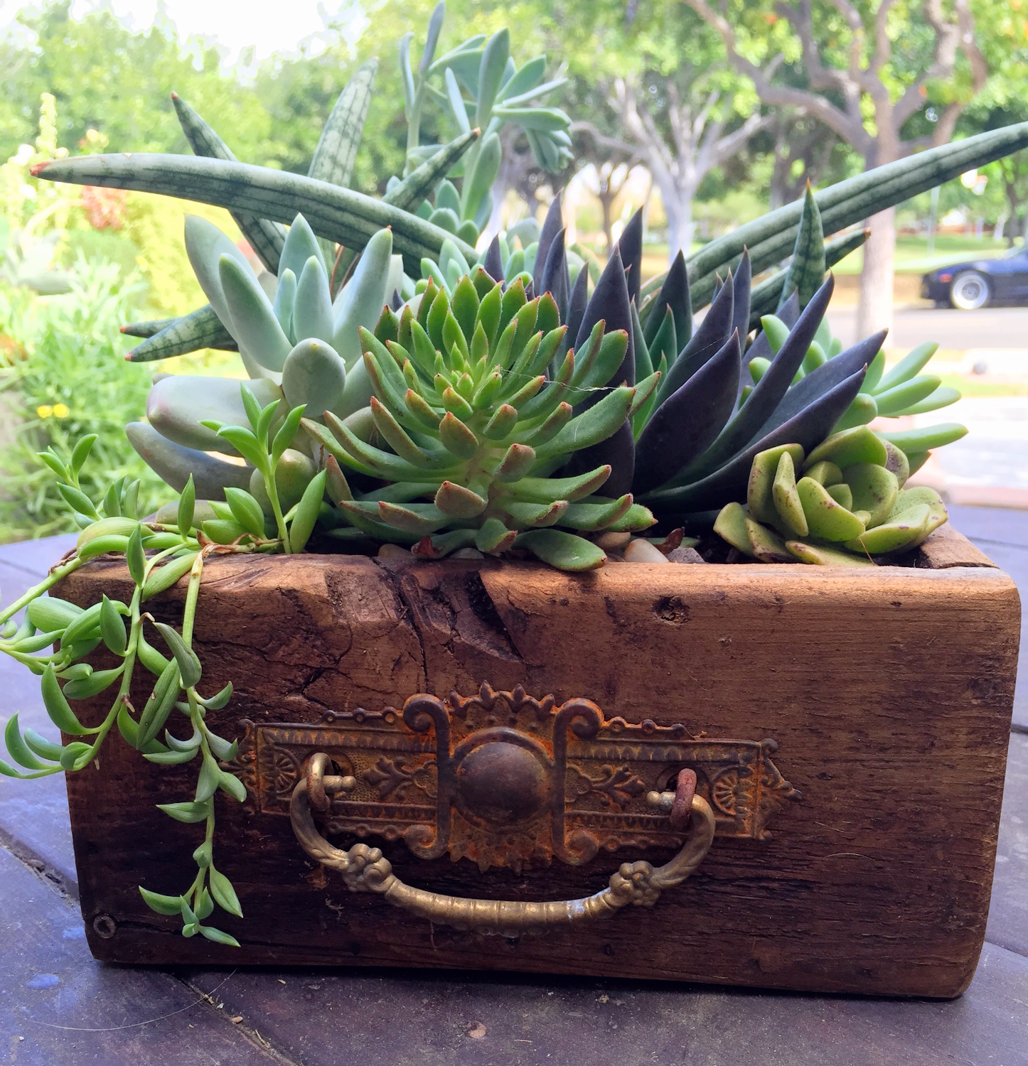 Reclaimed wood and Succulents