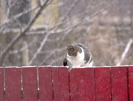 SNOW CAT 1.jpg