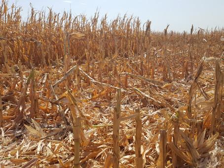 As Harvest Begins, Area Farmers Receiving Strong Cash Bids