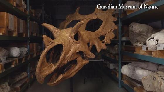 Montana man discovers new dinosaur species