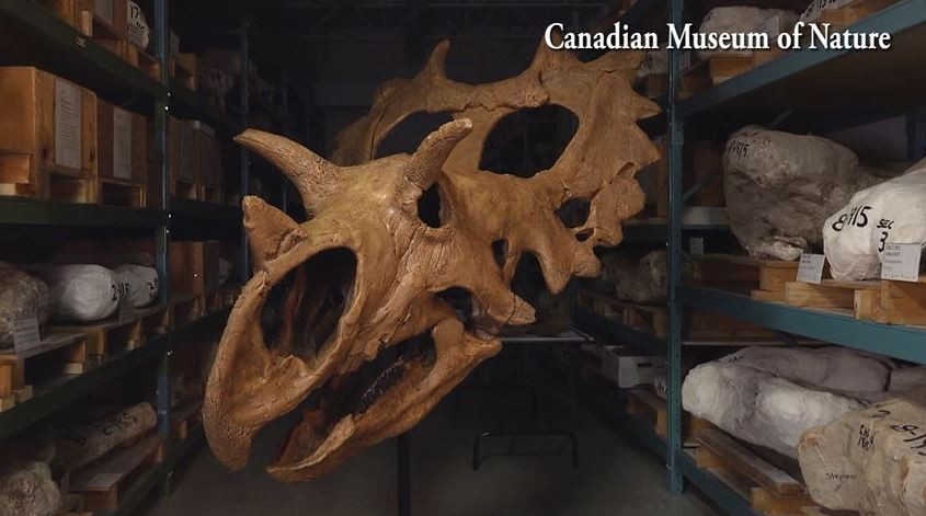 Courtesy: Canadian Museum of Nature