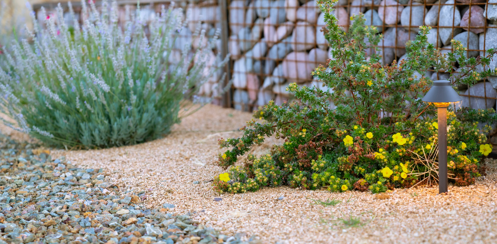 Gabion wall and plants