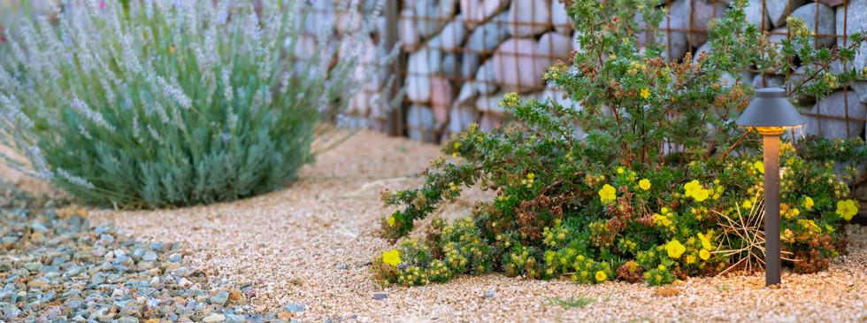 Gabion wall and plants