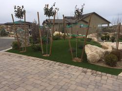 Frontyard landscape