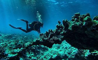 Plongée sous-marine en Méditérranée.jpg