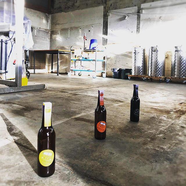 Unsere Biere freuen sich auch schon und schnuppern schon mal in die neue Braui rein....
