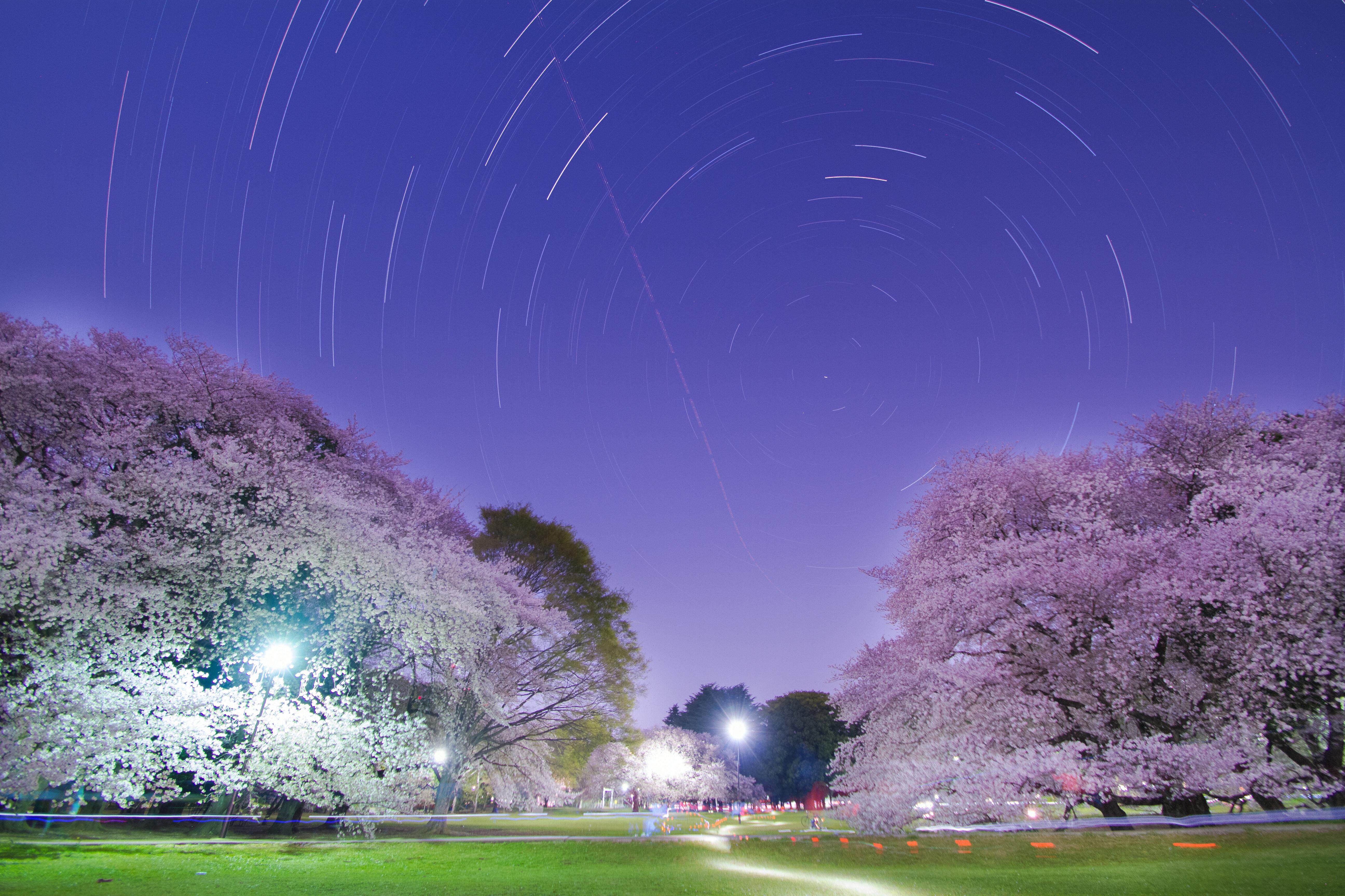 星たちの花見