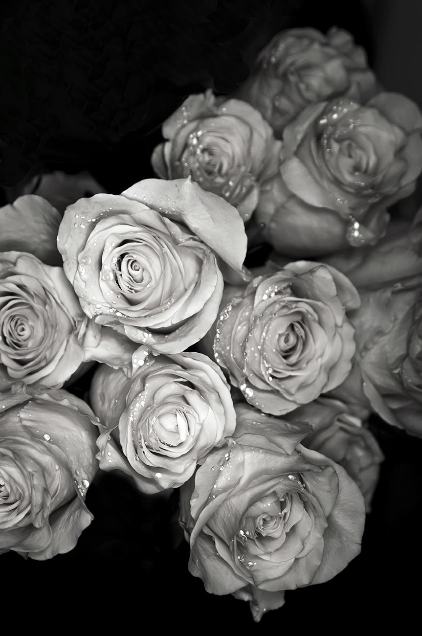 Roses: Wedding 1