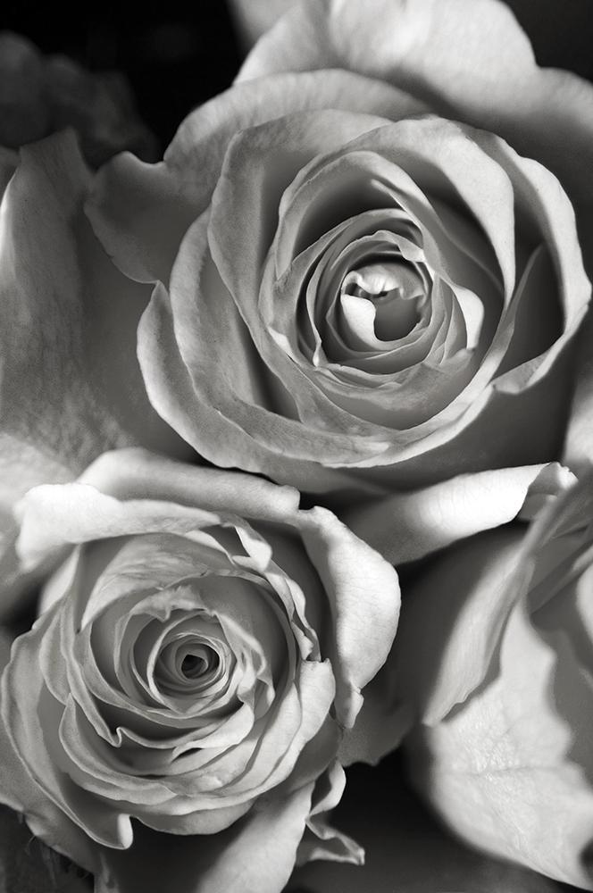 Roses: Haunting Memory