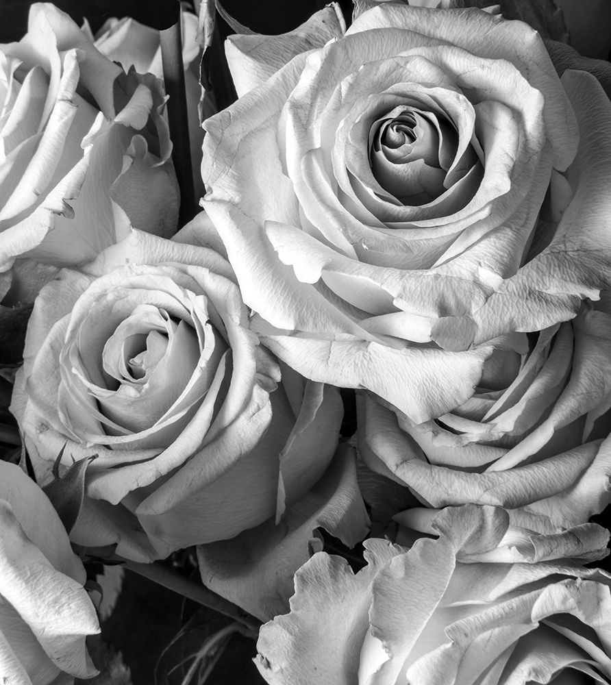 Convent Roses B&W