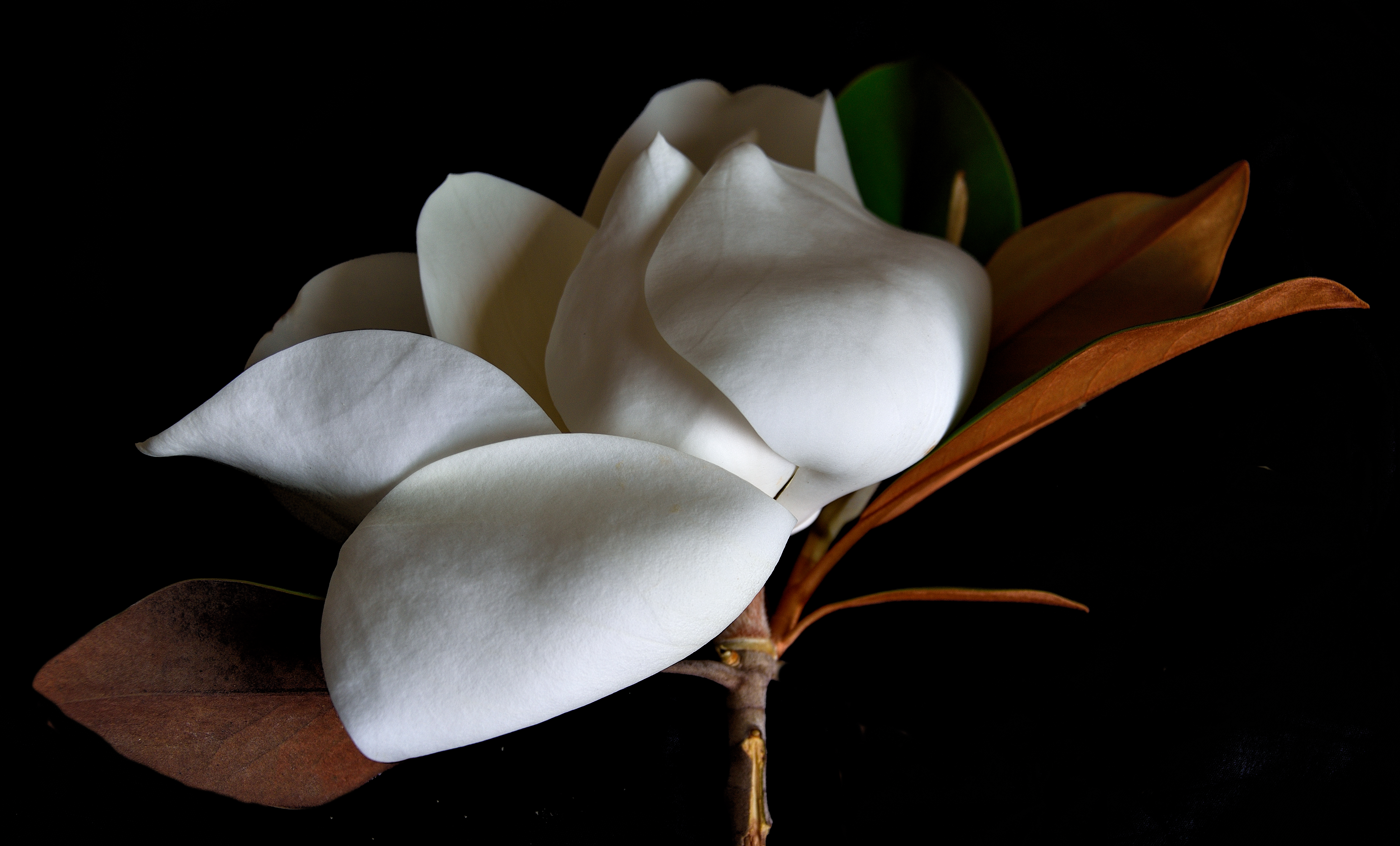 White Flower: Epiphany