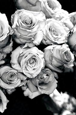 Roses: Everlasting