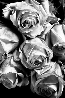 Roses: Morning Cuttings