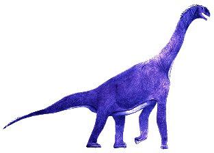 Atlasaurus. en.wikipedia.org/wiki/Atlasaurus