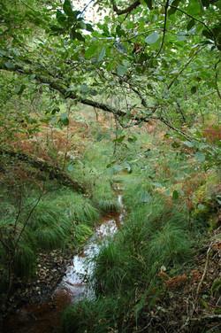 Forêt (6)