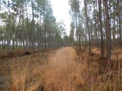 Forêt (2)