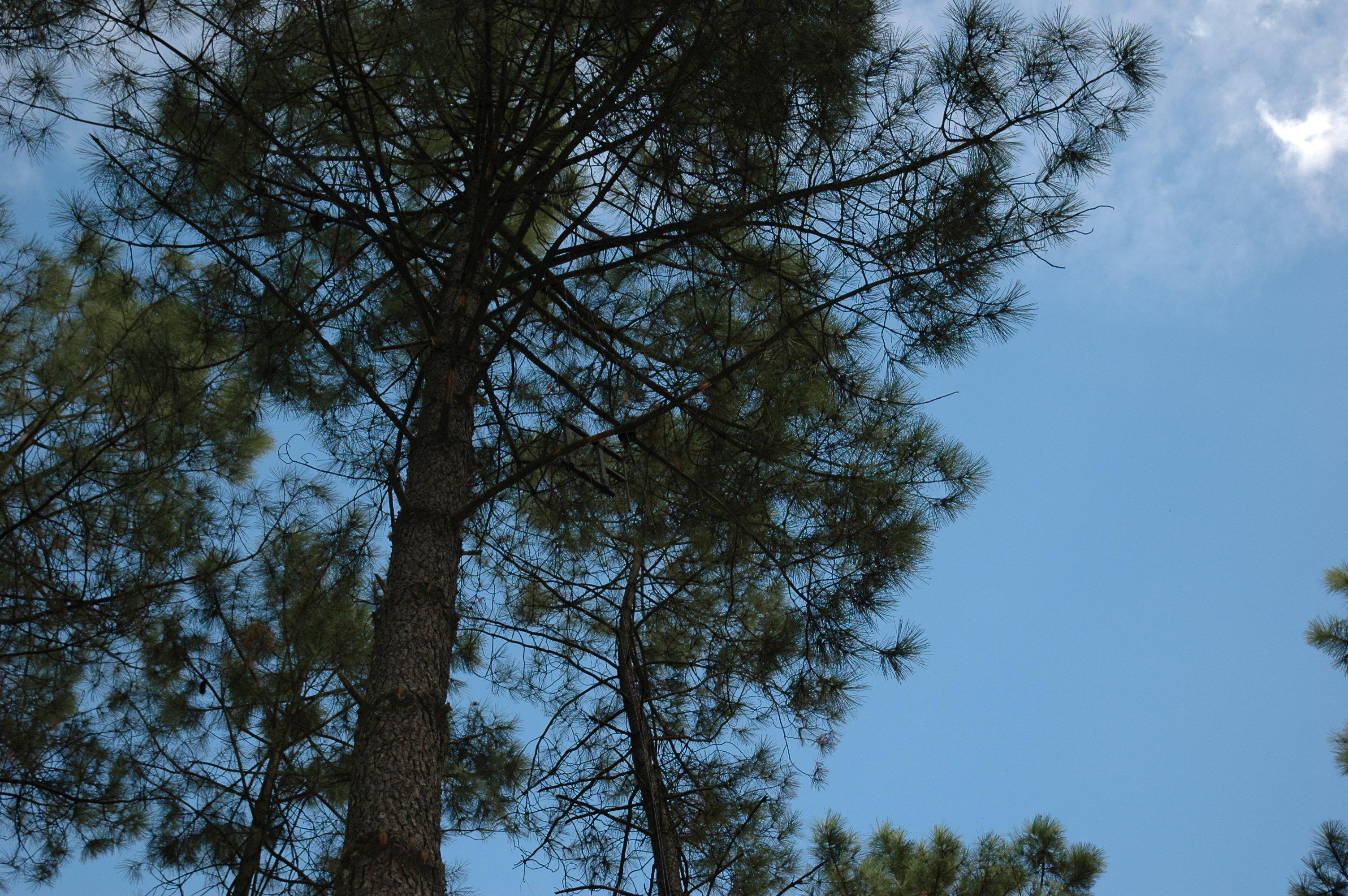 Forêt (3)