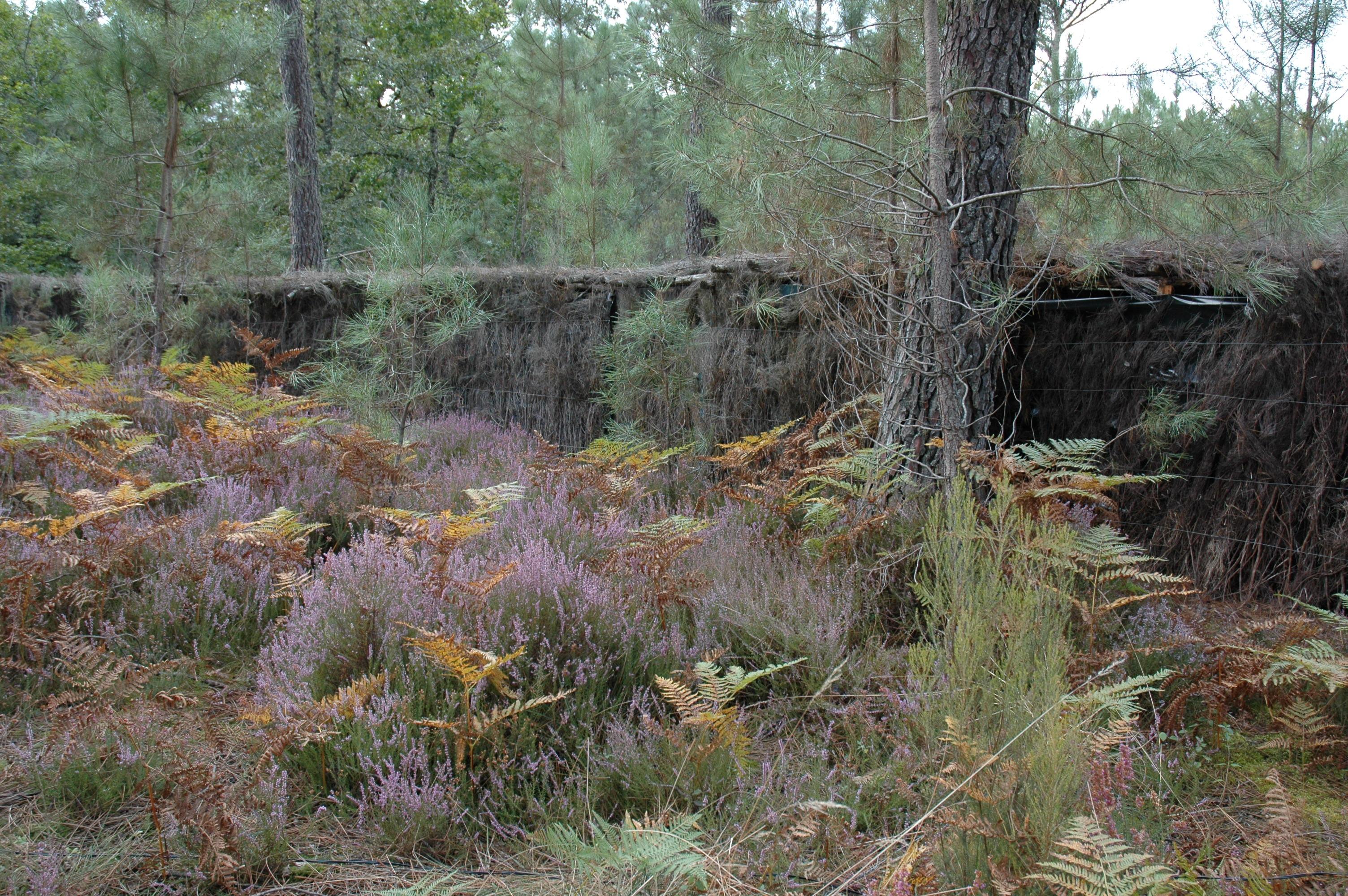 Forêt (4)