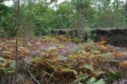 Forêt (5)