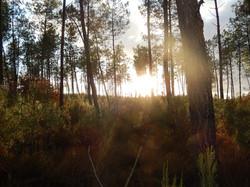 Forêt (1)