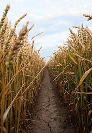 Agricultural chemical input reduction | Rize ag