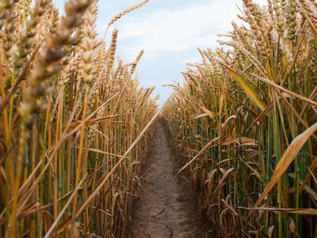 Prayer for Harvest (Blessing)