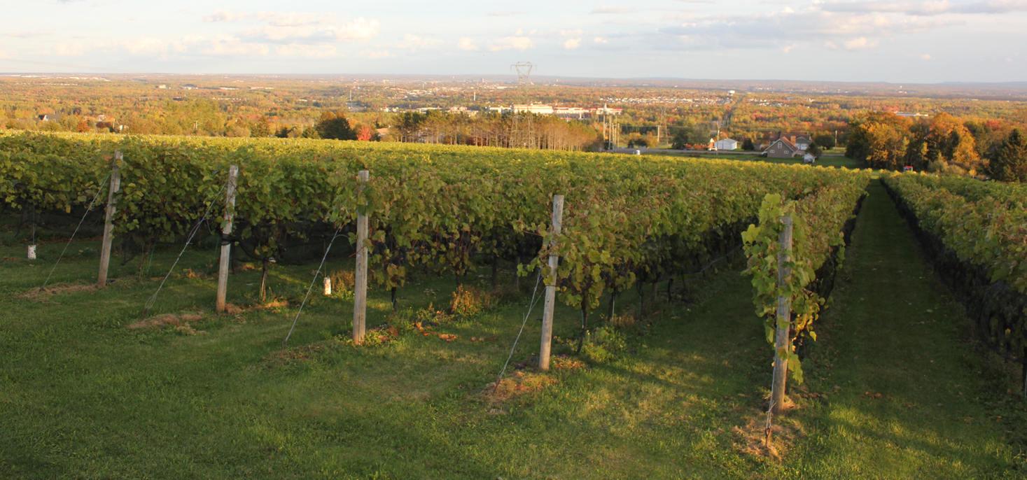 Pioneer Estate Winery