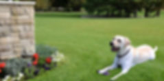 lawn, flower bed, grass
